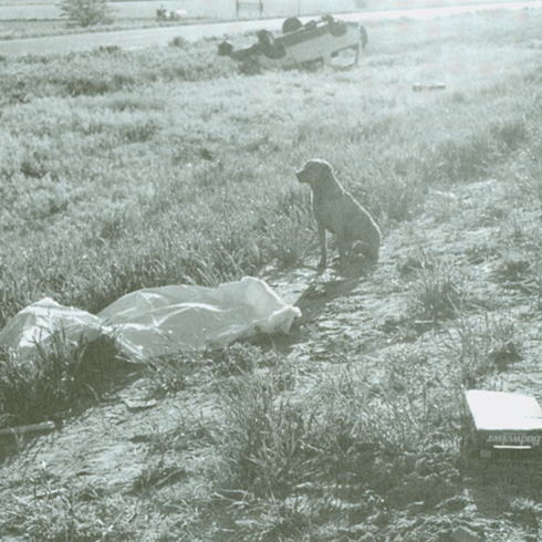 Nebraska State Trooper Mike Ritonya took this photograph at the scene of an automobile accident. The dog is sitting beside his 17-year-old owner, who is covered by a tarp. Both the dog and his owner were ejected from the vehicle seen overturned in the background. The beer carton in the foreground shows a likely contributing factor to the crash. Trooper Ritonya said that the dog would not leave his owner's side.