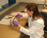 Forensic Update: The FBI Laboratory Division's New Forensic Anthropology Program