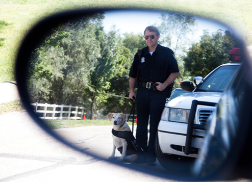 An officer enlists a canine officer's help during a traffic stop.