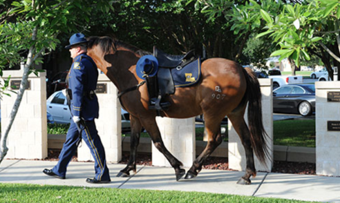 A riderless horse is seen at the Louisiana State Police Memorial.