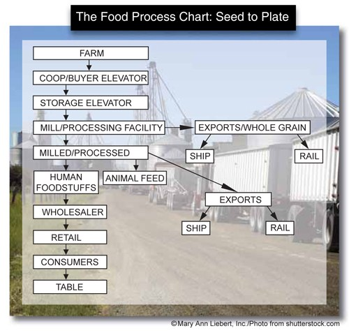 Shows the food process moving from the farm, to coop/buyer elevator, to storage elevator, and to the mill/processing facility. From the mill/processing facility, it can move either to human foodstuffs/wholesaler/retailer/consumers/table or to animal feed or to exports/whole grain (either ship or rail) or to exports (either ship or rail). © Mary Ann Liebert, Inc./Photo from shutterstock.com