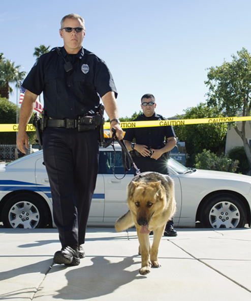 A police officer escorts a canine officer onto the scene of an incident.