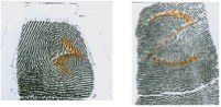 Altered Fingerprints: Z-Pattern Cut